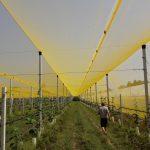ROMAGNA IN CAMPO 2017 : quest'anno all'Istituto Tecnico Agrario di Cesena.