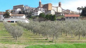 Az. Agr. Susi Bardi a Montiano. Varietà Nostrana di Brisighella e Ghiacciola.